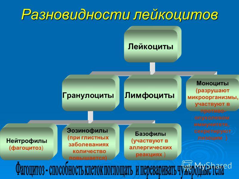 Разновидности лейкоцитов Лейкоциты Гранулоциты Нейтрофилы (фагоцитоз) Эозинофилы (при глистных заболеваниях количество повышается) Базофилы (участвуют в аллергических реакциях ) Лимфоциты Моноциты (разрушают микроорганизмы, участвуют в противо- опухо
