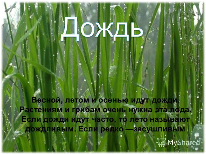 Весной, летом и осенью идут дожди. Растениям и грибам очень нужна эта вода. Если дожди идут часто, то лето называют дождливым. Если редко засушливым