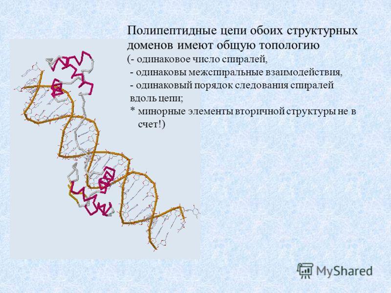 Полипептидные цепи обоих структурных доменов имеют общую топологию (- одинаковое число спиралей, - одинаковы межспиральные взаимодействия, - одинаковый порядок следования спиралей вдоль цепи; * минорные элементы вторичной структуры не в счет!)
