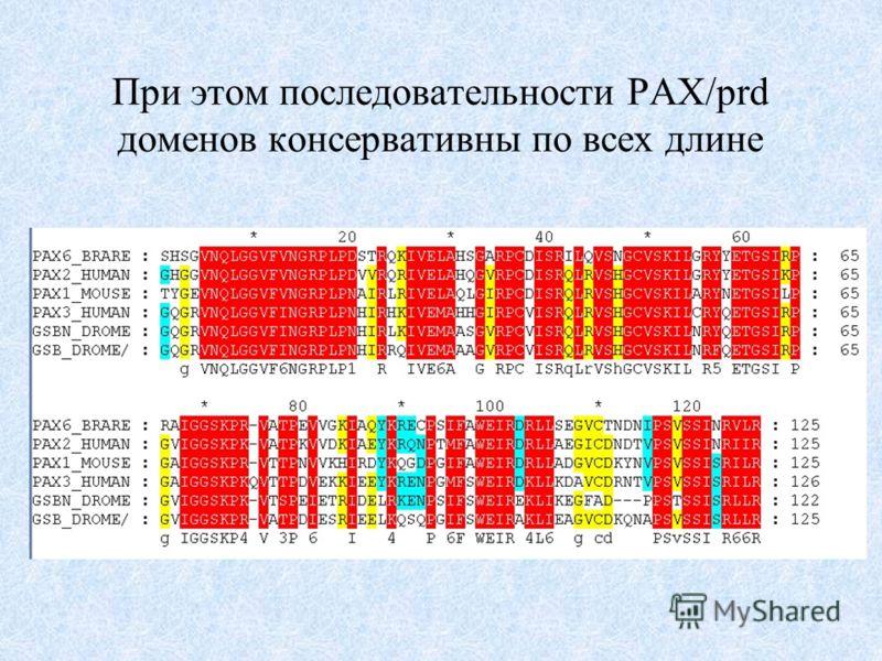 При этом последовательности PAX/prd доменов консервативны по всех длине