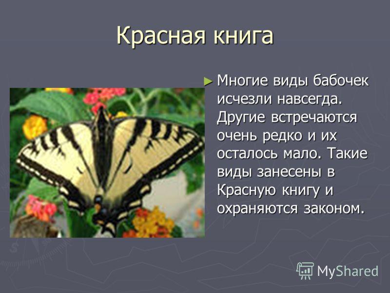 Красная книга Многие виды бабочек исчезли навсегда. Другие встречаются очень редко и их осталось мало. Такие виды занесены в Красную книгу и охраняются законом.