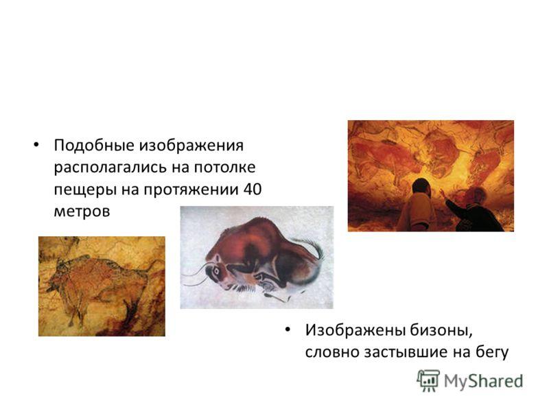 Подобные изображения располагались на потолке пещеры на протяжении 40 метров Изображены бизоны, словно застывшие на бегу