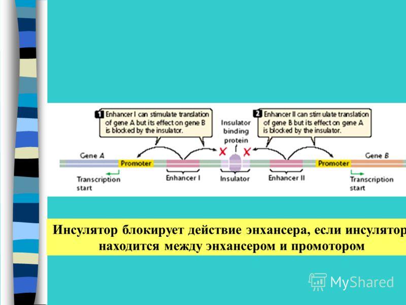 Инсулятор блокирует действие энхансера, если инсулятор находится между энхансером и промотором