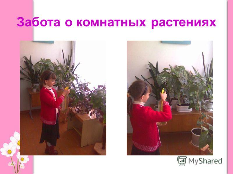 Забота о комнатных растениях