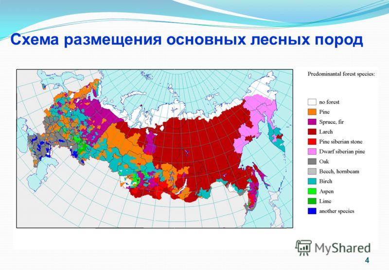 Схема размещения основных лесных пород 4