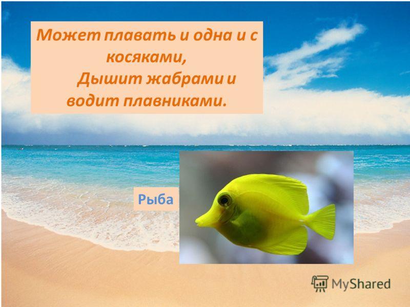 Может плавать и одна и с косяками, Дышит жабрами и водит плавниками. Рыба