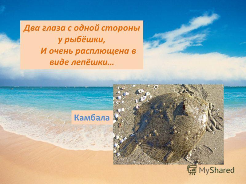 Два глаза с одной стороны у рыбёшки, И очень расплющена в виде лепёшки… Камбала