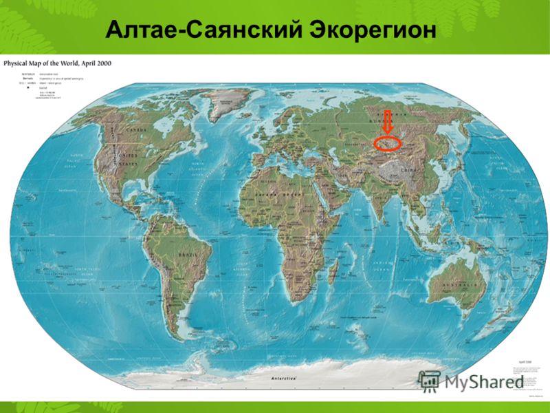 Алтае-Саянский Экорегион