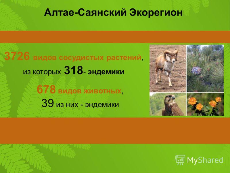 3726 видов сосудистых растений, из которых 318 - эндемики 678 видов животных, 39 из них - эндемики Алтае-Саянский Экорегион