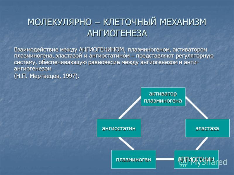 МОЛЕКУЛЯРНО – КЛЕТОЧНЫЙ МЕХАНИЗМ АНГИОГЕНЕЗА Взаимодействие между АНГИОГЕНИНОМ, плазминогеном, активатором плазминогена, эластазой и ангиостатином – представляют регуляторную систему, обеспечивающую равновесие между ангиогенезом и анти- ангиогенезом