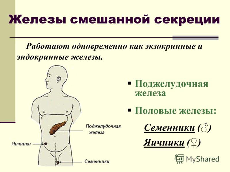Железы смешанной секреции Работают одновременно как экзокринные и эндокринные железы. Поджелудочная железа Половые железы: Семенники () Яичники ()