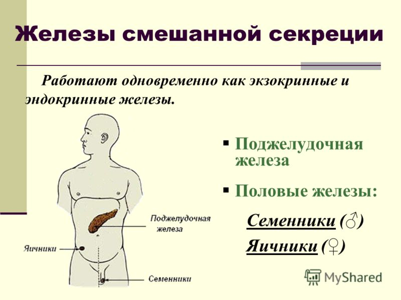 Железа Внутренней Секреции