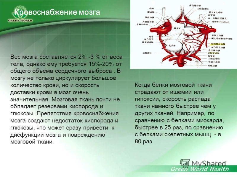 Вес мозга составляется 2% -3 % от веса тела, однако ему требуется 15%-20% от общего объема сердечного выброса. В мозгу не только циркулирует большое количество крови, но и скорость доставки крови в мозг очень значительная. Мозговая ткань почти не обл