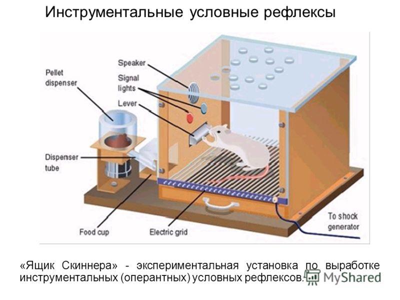 «Ящик Скиннера» - экспериментальная установка по выработке инструментальных (оперантных) условных рефлексов. Инструментальные условные рефлексы