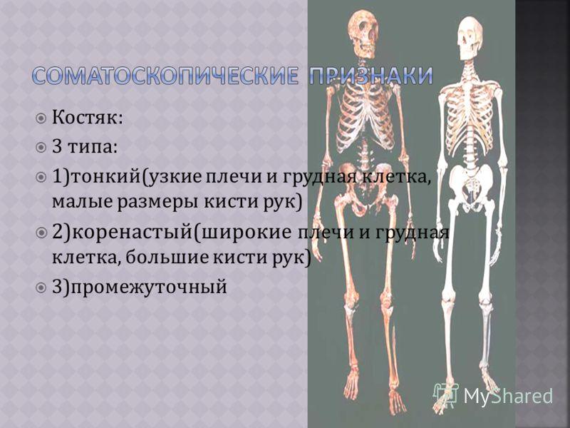 Костяк: 3 типа: 1)тонкий(узкие плечи и грудная клетка, малые размеры кисти рук) 2)коренастый(широкие плечи и грудная клетка, большие кисти рук) 3)промежуточный
