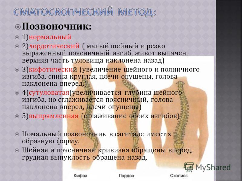 Позвоночник: 1)нормальный 2)лордотический ( малый шейный и резко выраженный поясничный изгиб, живот выпячен, верхняя часть туловища наклонена назад) 3)кифотический (увеличение шейного и пояничного изгиба, спина круглая, плечи опущены, голова наклонен