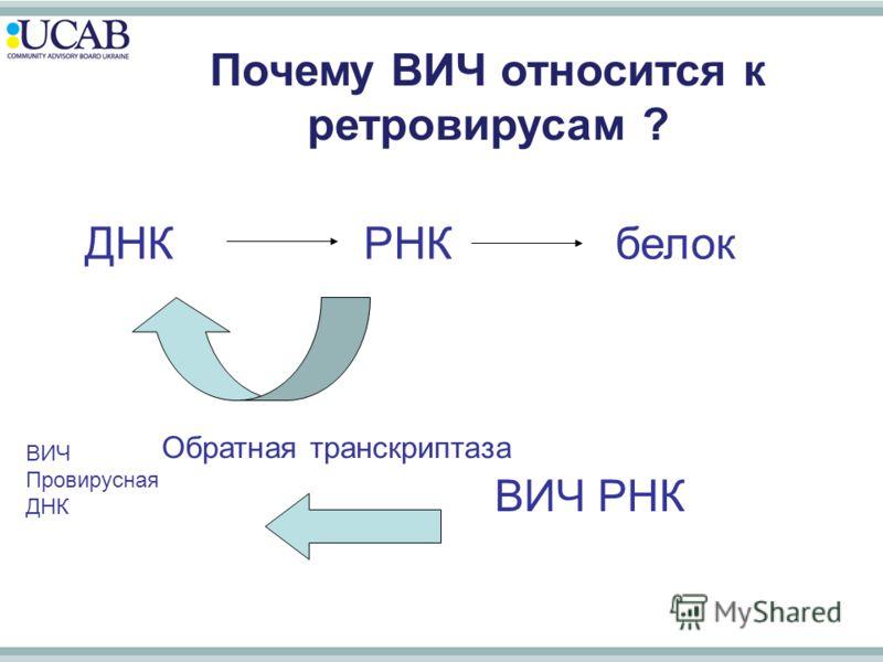 ДНК РНК белок Почему ВИЧ относится к ретровирусам ? Обратная транскриптаза ВИЧ РНК ВИЧ Провирусная ДНК