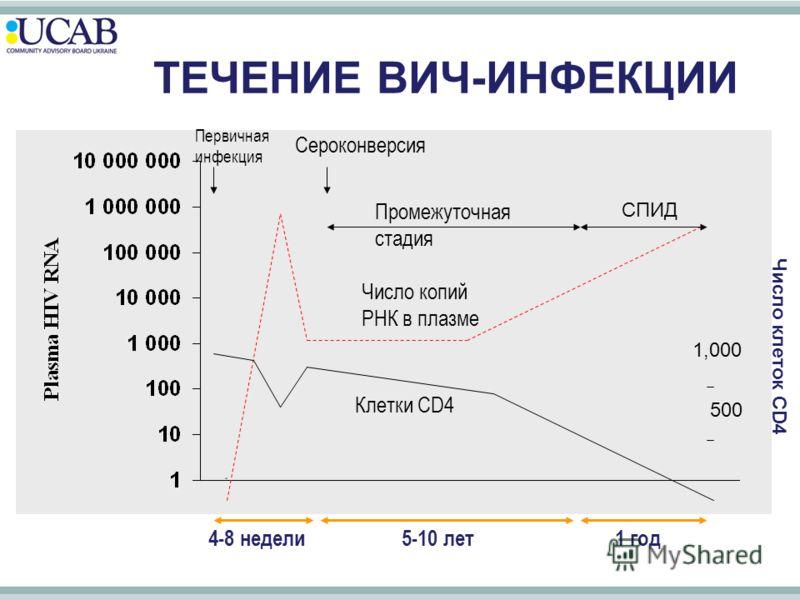 ТЕЧЕНИЕ ВИЧ-ИНФЕКЦИИ Число копий РНК в плазме Клетки CD4 4-8 недели5-10 лет1 год Число клеток CD4 1,000 500 Промежуточная стадия СПИД Первичная инфекция Сероконверсия