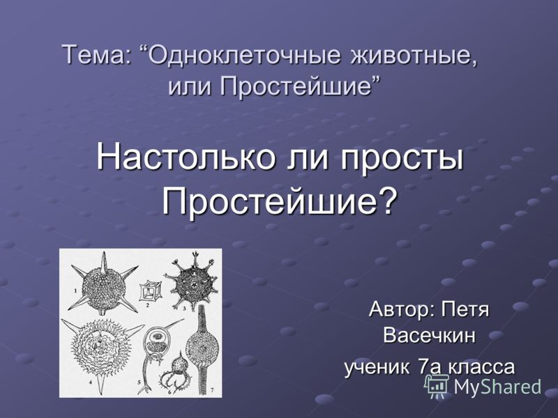 Тема: Одноклеточные животные, или Простейшие Автор: Петя Васечкин ученик 7а класса Настолько ли просты Простейшие?