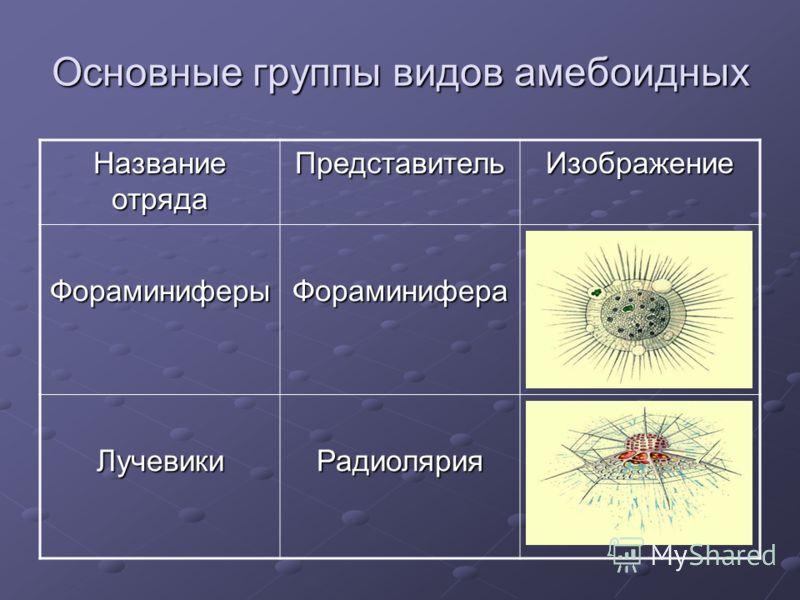 Основные группы видов амебоидных Название отряда ПредставительИзображение ФораминиферыФораминифера ЛучевикиРадиолярия