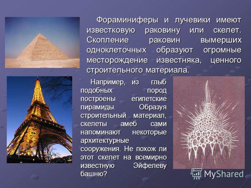 Фораминиферы и лучевики имеют известковую раковину или скелет. Скопление раковин вымерших одноклеточных образуют огромные месторождение известняка, ценного строительного материала. Например, из глыб подобных пород построены египетские пирамиды. Образ