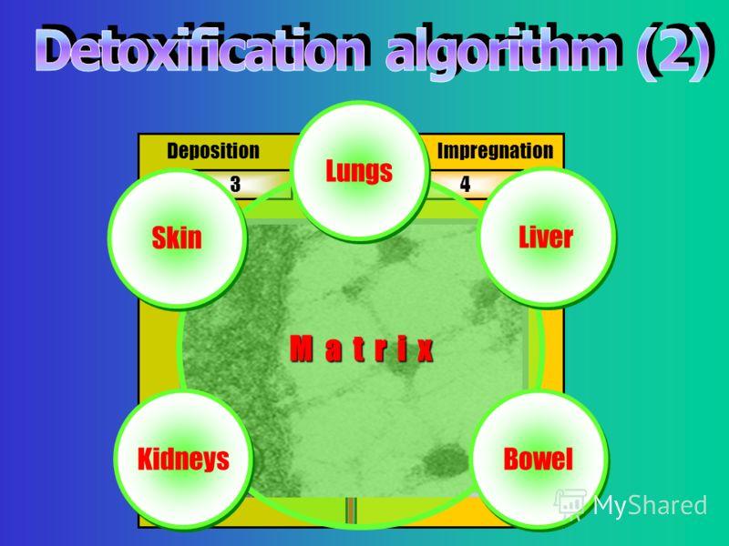34 Deposition Impregnation M a t r ix Lungs Skin Kidneys Liver Bowel