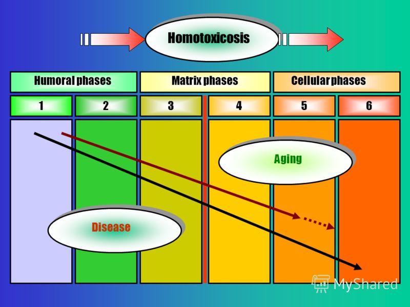 123456 Humoral phasesMatrix phasesCellular phases Disease Aging Homotoxicosis