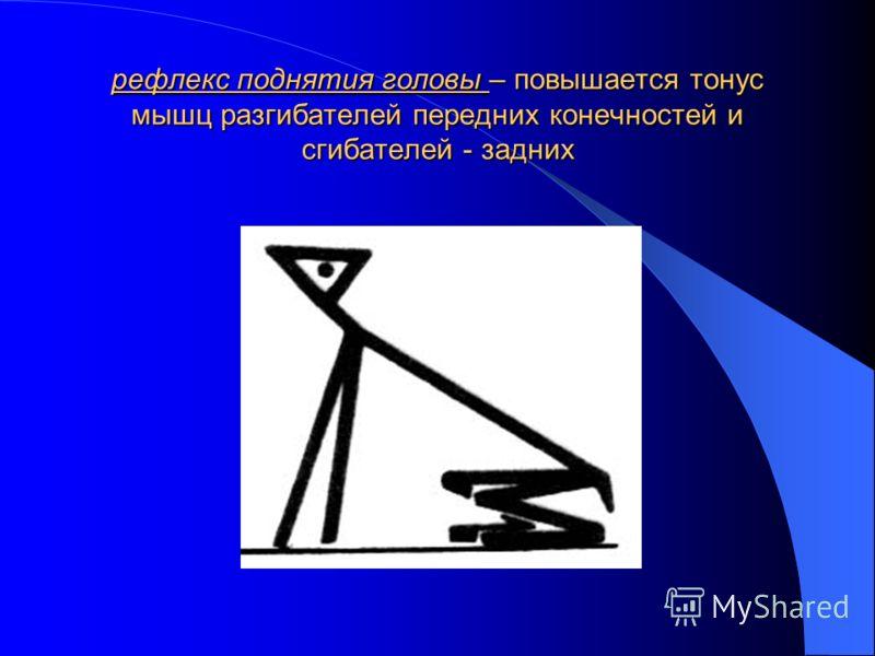рефлекс поднятия головы – повышается тонус мышц разгибателей передних конечностей и сгибателей - задних