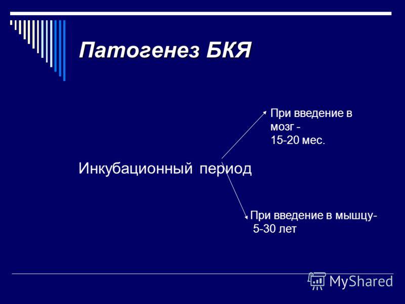 Патогенез БКЯ Инкубационный период При введение в мозг - 15-20 мес. При введение в мышцу- 5-30 лет
