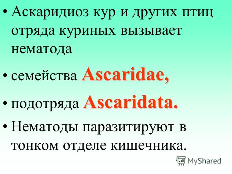 Аскаридиоз кур и других птиц отряда куриных вызывает нематода Ascaridae,семейства Ascaridae, Ascaridata.подотряда Ascaridata. Нематоды паразитируют в тонком отделе кишечника.