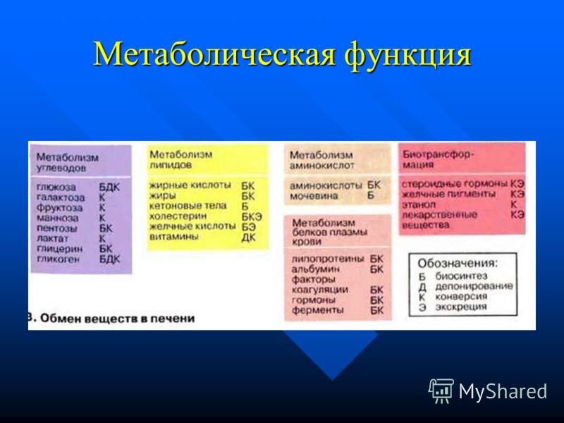 Метаболическая функция