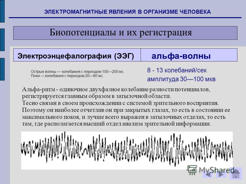 ЭЛЕКТРОМАГНИТНЫЕ ЯВЛЕНИЯ В ОРГАНИЗМЕ ЧЕЛОВЕКА Биопотенциалы и их регистрация альфа-волны Альфа-ритм - одиночное двухфазное колебание разности потенциалов, регистрируется главным образом в затылочной области. Тесно связан в своем происхождении с систе