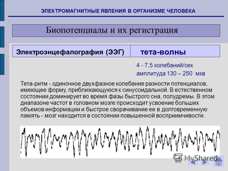 ЭЛЕКТРОМАГНИТНЫЕ ЯВЛЕНИЯ В ОРГАНИЗМЕ ЧЕЛОВЕКА Биопотенциалы и их регистрация тета-волны Тета-ритм - одиночное двухфазное колебание разности потенциалов, имеющее форму, приближающуюся к синусоидальной. В естественном состоянии доминирует во время фазы