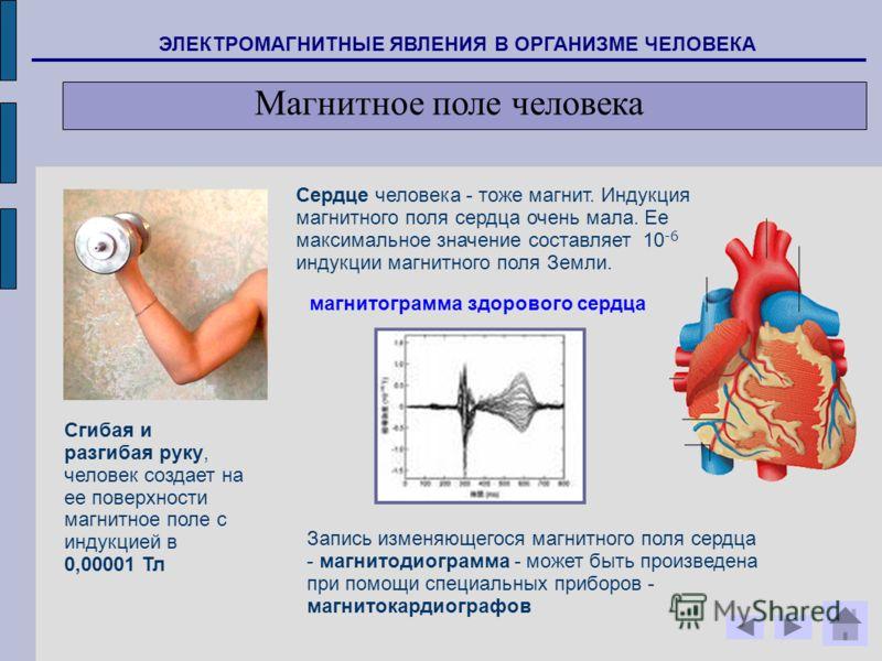Сгибая и разгибая руку, человек создает на ее поверхности магнитное поле с индукцией в 0,00001 Тл Сердце человека - тоже магнит. Индукция магнитного поля сердца очень мала. Ее максимальное значение составляет 10 -6 индукции магнитного поля Земли. Зап