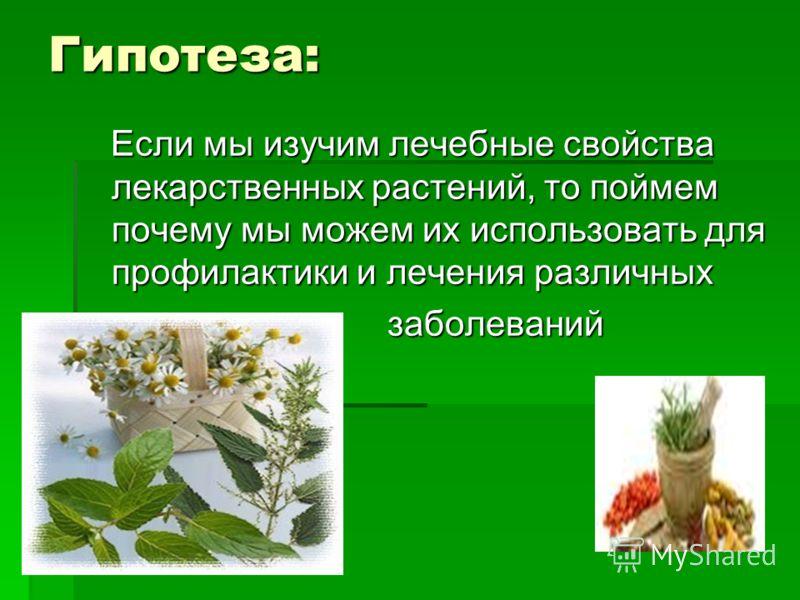 Гипотеза: Если мы изучим лечебные свойства лекарственных растений, то поймем почему мы можем их использовать для профилактики и лечения различных Если мы изучим лечебные свойства лекарственных растений, то поймем почему мы можем их использовать для п
