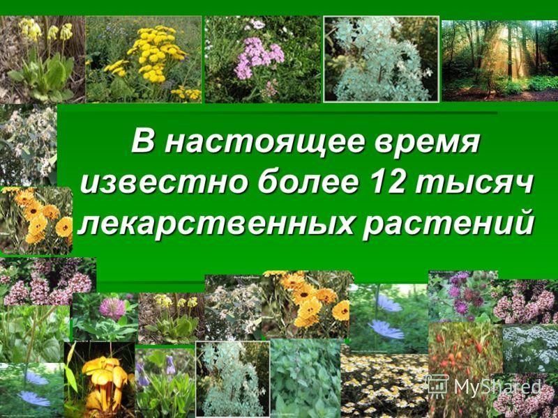 В настоящее время известно более 12 тысяч лекарственных растений В настоящее время известно более 12 тысяч лекарственных растений