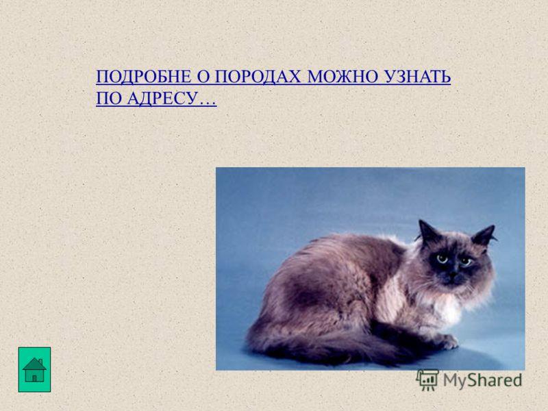 Сиамские кошки, как порода, известны с давних времен. Корни её уходят в севера-восток Сиама (современный Таиланд). Это короткошерстные кошки, с гибким мускулистым туловищем, длинными стройными лапами (причём задние длиннее передних), тонким хвостом,
