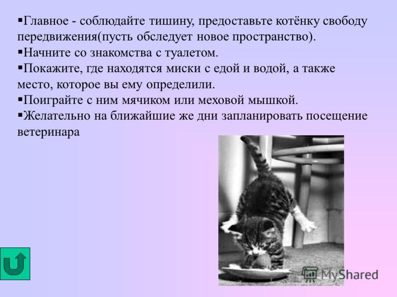 Туалет (большой или маленький, с бортиком или без) К туалету также нужен наполнитель (можно обойтись и без него) Подумайте о посуде для еды и питья. Приобретите специальную когтеточку или сделайте её сами. Если Вы планируете: отпускать котенка на ули