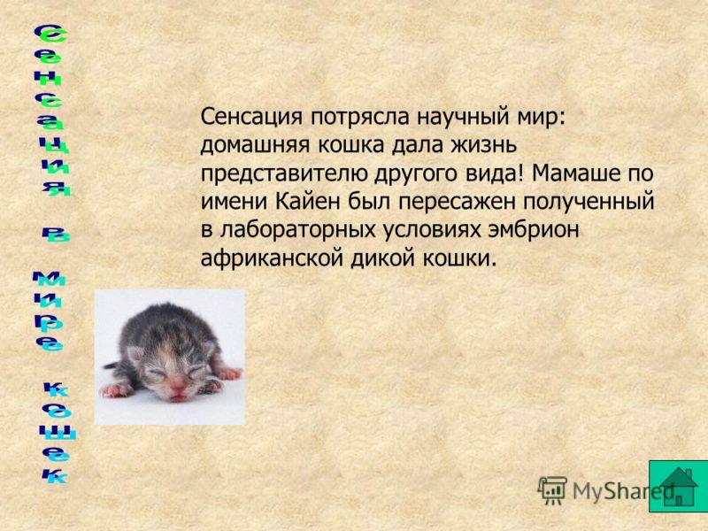 Кошки самые-самые Чемпионом среди долгожителей оказалась кошка Пусс (США), она прожила 36 лет.(средняя продолжительность жизни кошек около 20 лет) Обычно у кошки рождается 3-5 котят. А кошка по имени Колокольчик из Южной Африки родила 14 котят-близне
