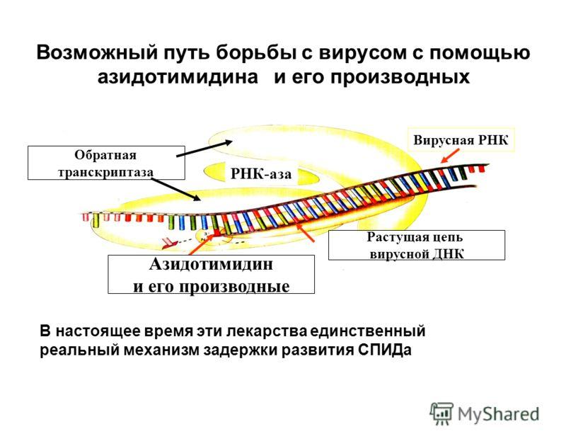 Возможный путь борьбы с вирусом с помощью азидотимидина и его производных Вирусная РНК Растущая цепь вирусной ДНК РНК-аза Обратная транскриптаза Азидотимидин и его производные В настоящее время эти лекарства единственный реальный механизм задержки ра