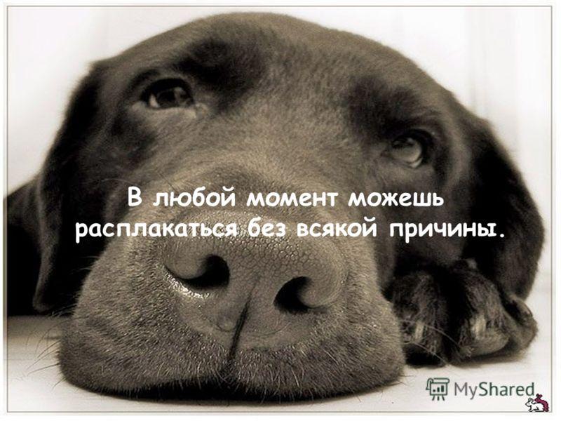 В любой момент можешь расплакаться без всякой причины.
