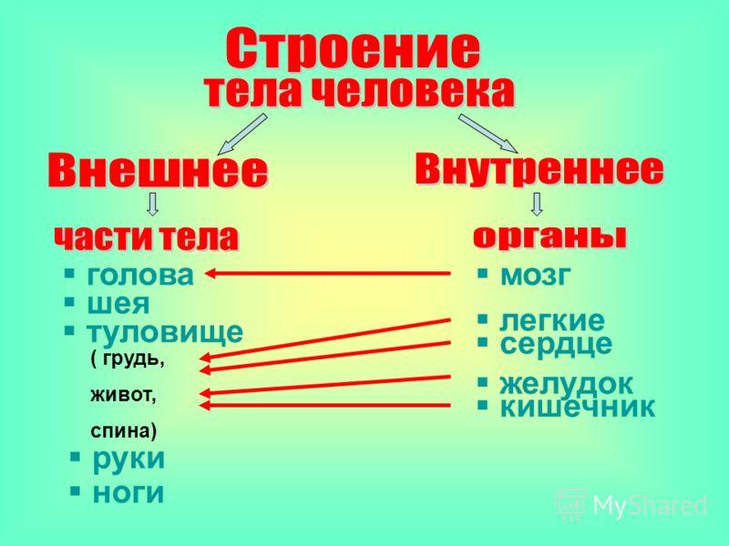 Кишечник-это толстая и тонкая кишка. Он находится в животе. В нём пища переваривается и впитывается организмом.