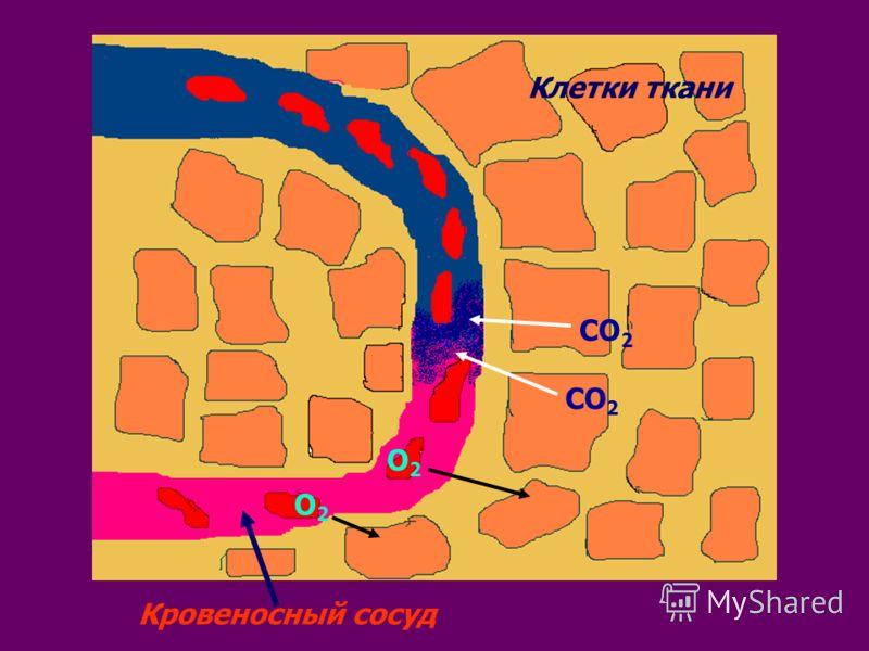 Клетки ткани Кровеносный сосуд О2О2 О2О2 СО 2
