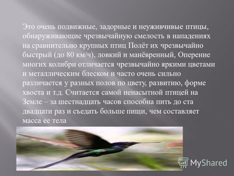 Это очень подвижные, задорные и неуживчивые птицы, обнаруживающие чрезвычайную смелость в нападениях на сравнительно крупных птиц Полёт их чрезвычайно быстрый ( до 80 км / ч ), ловкий и манёвренный, Оперение многих колибри отличается чрезвычайно ярки