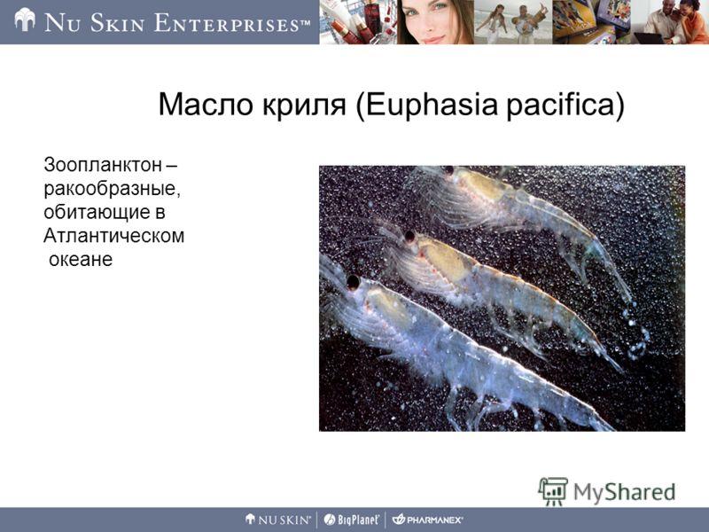 Масло криля (Euphasia pacifica) Зоопланктон – ракообразные, обитающие в Атлантическом океане
