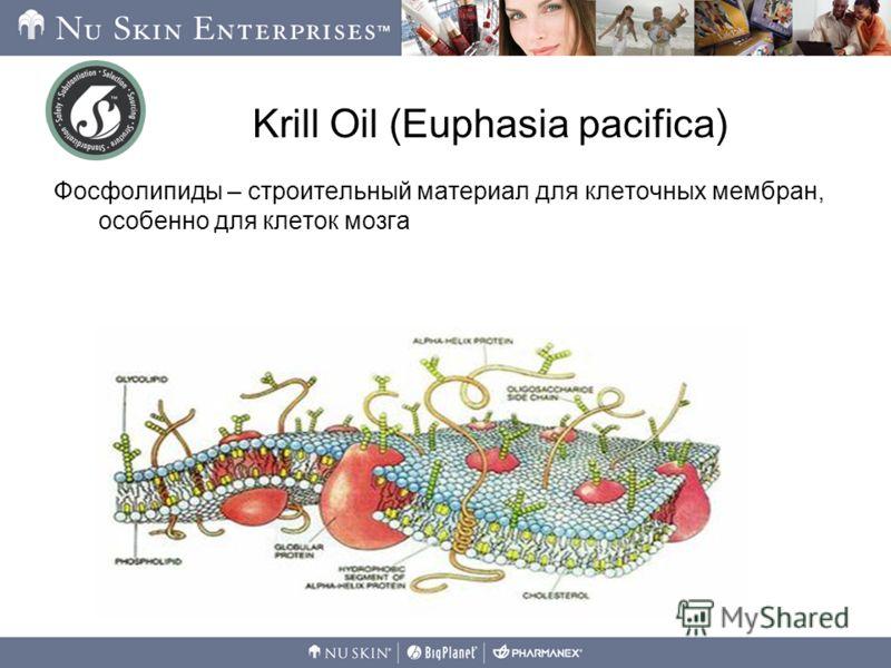 Krill Oil (Euphasia pacifica) Фосфолипиды – строительный материал для клеточных мембран, особенно для клеток мозга Глицерол
