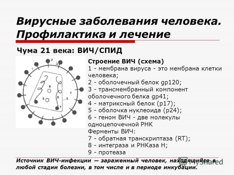 Вирусные заболевания человека. Профилактика и лечение Чума 21 века: ВИЧ/СПИД Строение ВИЧ (схема) 1 - мембрана вируса - это мембрана клетки человека; 2 - оболочечный белок gp120; 3 - трансмембранный компонент оболочечного белка gp41; 4 - матриксный б