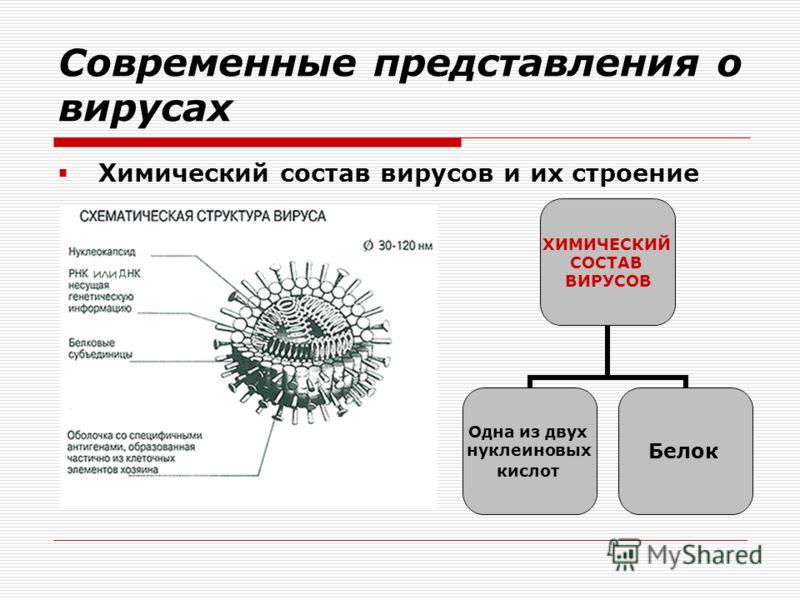 Современные представления о вирусах Химический состав вирусов и их строение ХИМИЧЕСКИЙ СОСТАВ ВИРУСОВ Одна из двух нуклеиновых кислот Белок