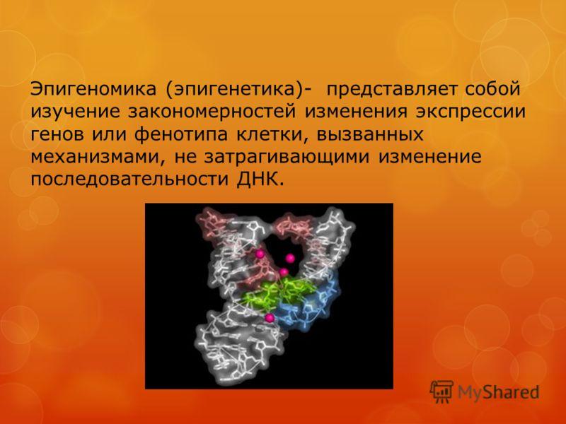 Эпигеномика (эпигенетика)- представляет собой изучение закономерностей изменения экспрессии генов или фенотипа клетки, вызванных механизмами, не затрагивающими изменение последовательности ДНК.