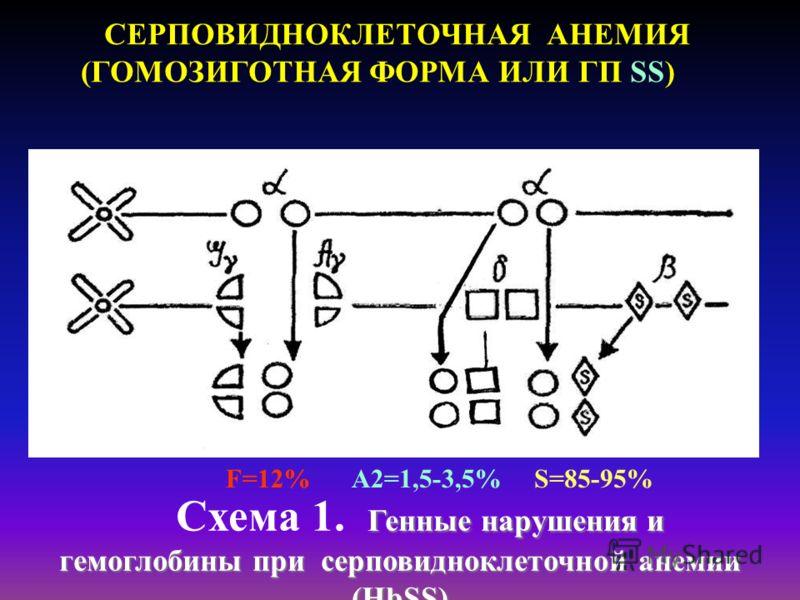 СЕРПОВИДНОКЛЕТОЧНАЯ АНЕМИЯ (ГОМОЗИГОТНАЯ ФОРМА ИЛИ ГП SS) Генные нарушения и гемоглобины при серповидноклеточной анемии (HbSS) Схема 1. Генные нарушения и гемоглобины при серповидноклеточной анемии (HbSS) F=12%A2=1,5-3,5%S=85-95%